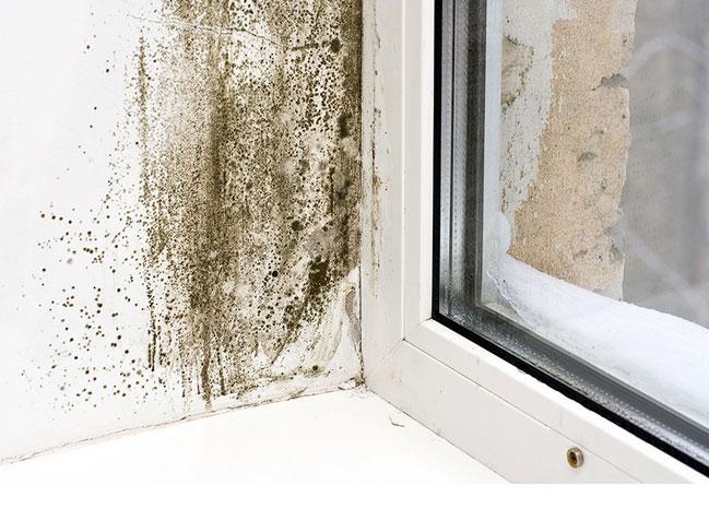 mold assessment